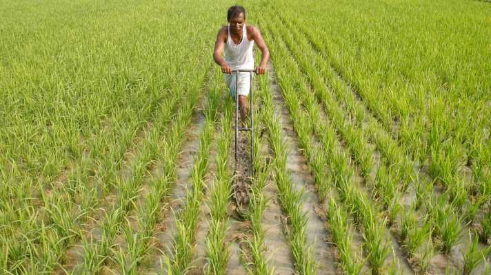 Summer crop planting down by 6.9 %: Agriculture Ministry data
