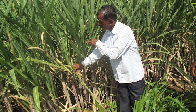 AGRICULTURETamil Nadu Sugar mills cripple due to water crisis
